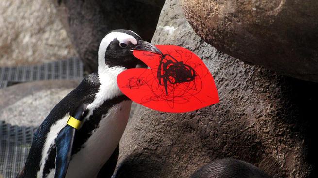 Biologist Brooke Weinstein Gives Penguins Valentine ...