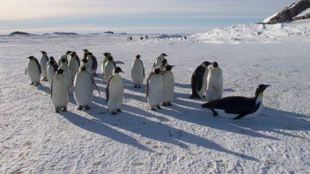 HT_penguin_robot_2_sr_131120_16x9_608