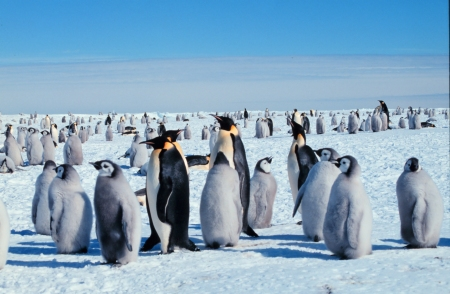 EmperorPenguins_MichaelVanWoert_NOAA
