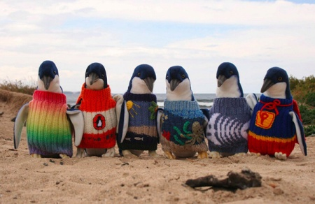 penguin-sweaters-1