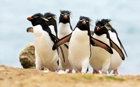 rockhopper-penguin2
