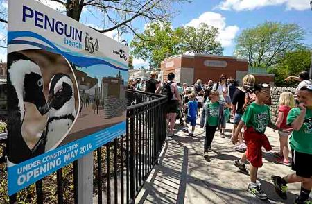 Toledo Zoo's Penguin Beach