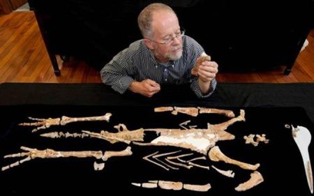 kairuku-penguin-fossils