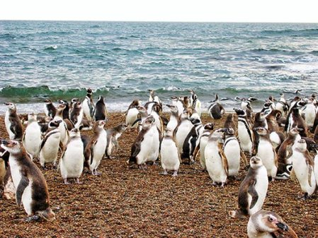penguin-group-beach-DBoersma