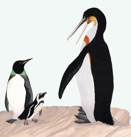 Prehistoric penguin checks out his contemporary cousins