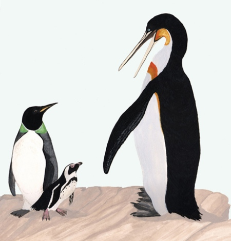 Prehistoric penguin checks out his contemporary cousins