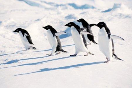 penguins_slide-bd6c9f0f6fc6a4872942ba488b81f54933e1ce0b-s4-c85