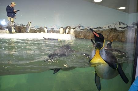 penguinsinside2