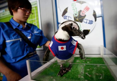 Meanwhile, over in Tokyo, a 2-year-old penguin named Aochan made a prediction on the opening Japan vs. Ivory Coast match by spinning a wheel with her beak. The wheel predicted a Japan draw, but the Ivory Coast went on to win that match, 2-1.