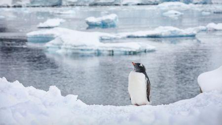 HT_gentoo_penguin_antarctica_2008_jt_140705_16x9_992-1