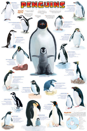 Emperor penguin size comparison - photo#28
