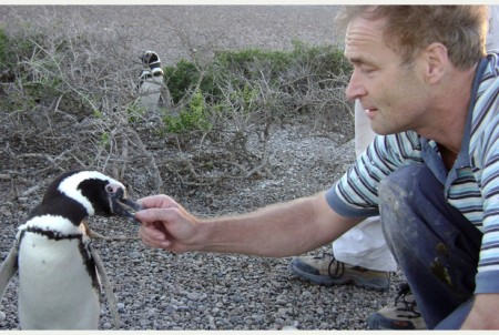 Rory Wilson Tagging A Penguin