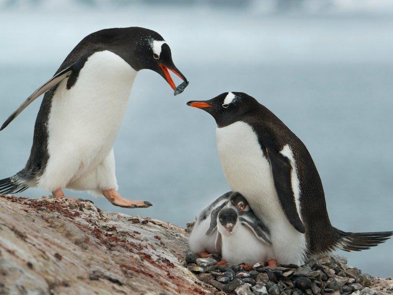 https://penguinplacepost.files.wordpress.com/2015/05/42-67137516__800x600_q85_crop.jpg