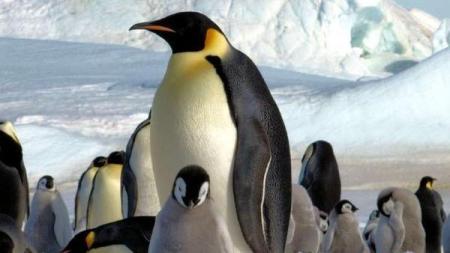 la-sci-sn-emperor-penguin-feathers-20151020-001