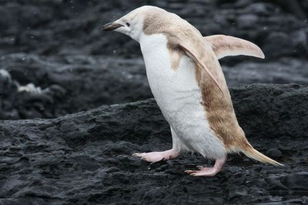 02-mutant-blonde-penguin.jpg