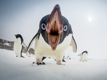 penguin-mouth.jpg
