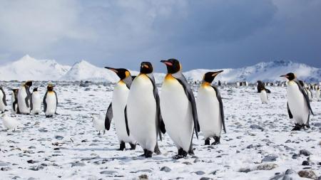 penguins-antartica-taste